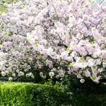 4月後半まで桜が楽しめる東京のお花見スポットへGO!