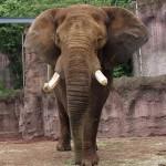 動物園 ゾウ