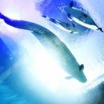 海のハンター サメ