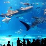 海のハンター サメが生で見られる水族館はどこ?