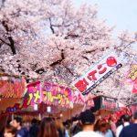 小金井公園桜まつり ライトアップ決定!混雑は?駐車場やアクセスは?